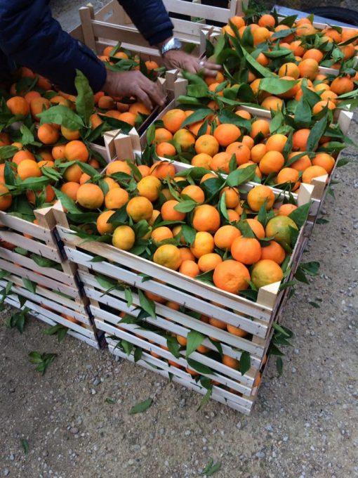 Clementine-Bio