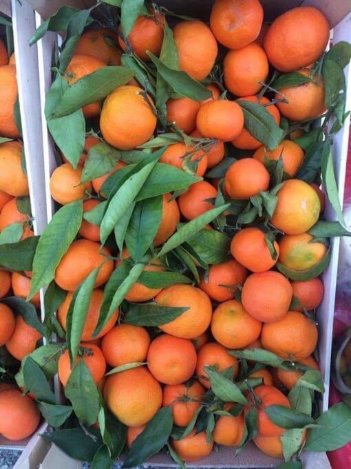 Clementini di Sicilia